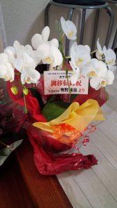 おっくんお花