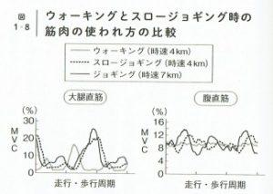 歩行とランの筋肉の使われ方